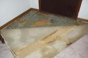 Pet Stained Carpet And Padding Advance Cleaning