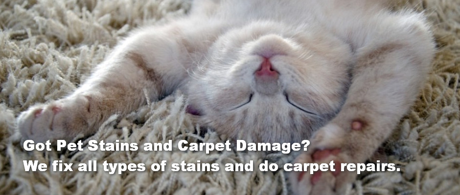 got pet stains need repairs